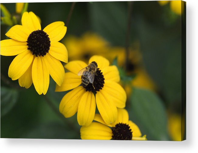 Yellow Acrylic Print featuring the photograph One bee over the flower's nest by Adrian Bud