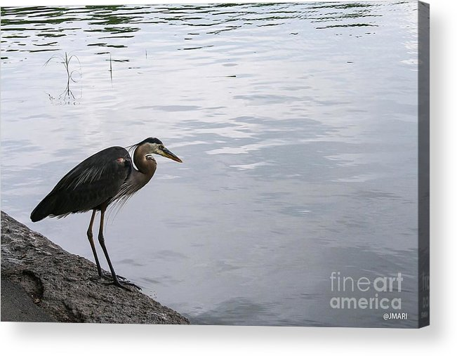 #nature Acrylic Print featuring the photograph One Fine Day by Jacquelinemari