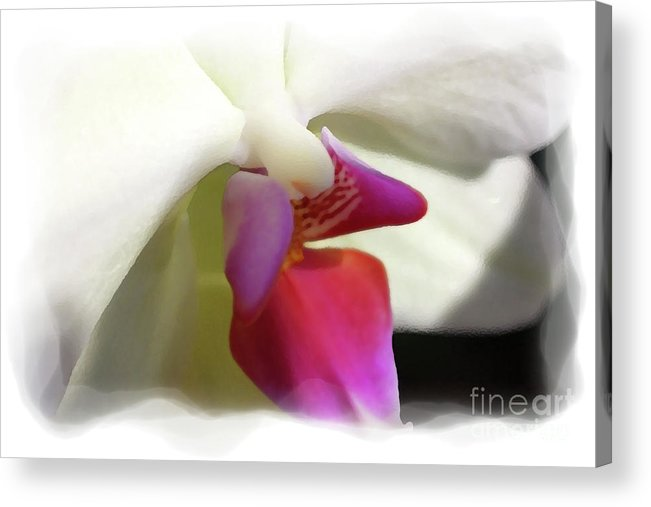 Orchid Acrylic Print featuring the photograph Orchid 1 by David Bearden