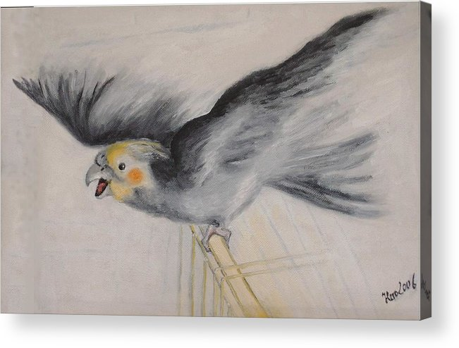 Cockatiel.pet Acrylic Print featuring the painting our cockatiel Coco by Helmut Rottler