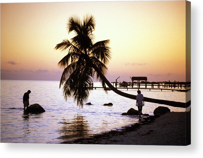 Sunset Acrylic Print featuring the photograph Palm At The Moorings by Carl Purcell