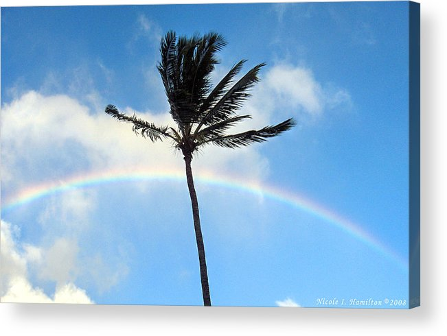 Palm Tree Acrylic Print featuring the photograph Palm Tree in the Sky by Nicole I Hamilton