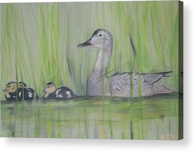 Pintail Ducks Acrylic Print featuring the painting Pintails In The Reeds by Debra Sandstrom