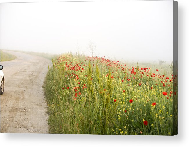 Agriculture Acrylic Print featuring the photograph Poppy flower guarding the road by Adrian Bud
