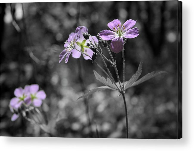 Wildflowers Acrylic Print featuring the photograph Quiet Gatherings by Dylan Punke