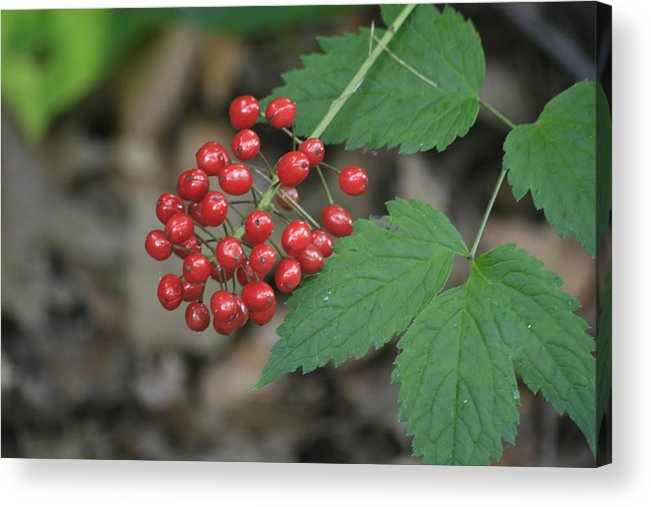 Landscape Acrylic Print featuring the photograph Red Bead by Alan Rutherford