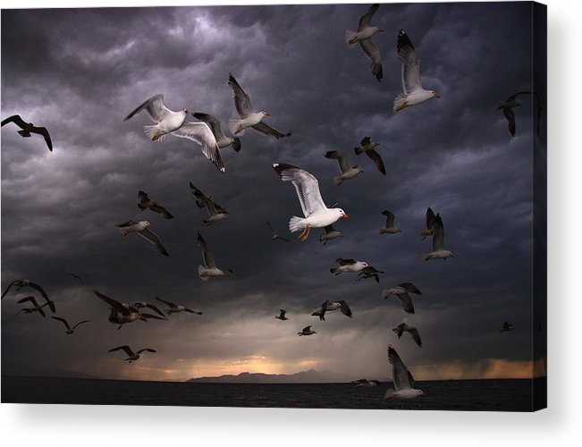 Gull Acrylic Print featuring the photograph Seagull Storm by Gene Praag