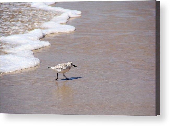 Nature Acrylic Print featuring the photograph Shorebird by Ty Nichols