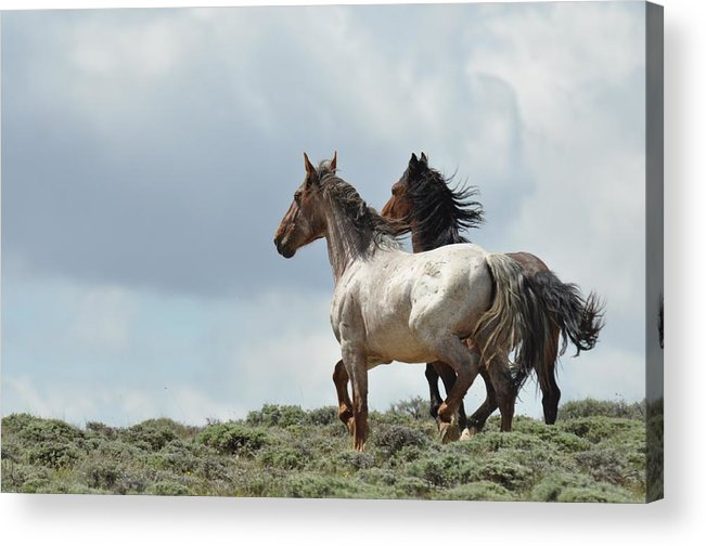 Wild Horses Acrylic Print featuring the photograph So Long by Frank Madia