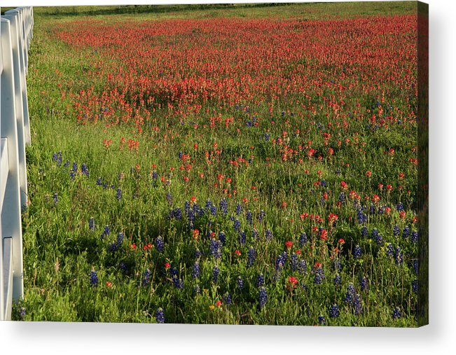 Flowers Acrylic Print featuring the photograph Spring in Central Texas by Frank Madia