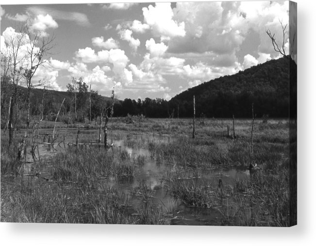 Ansel Adams Acrylic Print featuring the photograph SwampOEM by Curtis J Neeley Jr