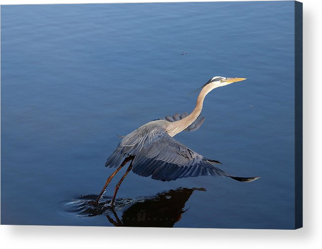 Acrylic Print featuring the photograph Take Off Lean by Tony Umana