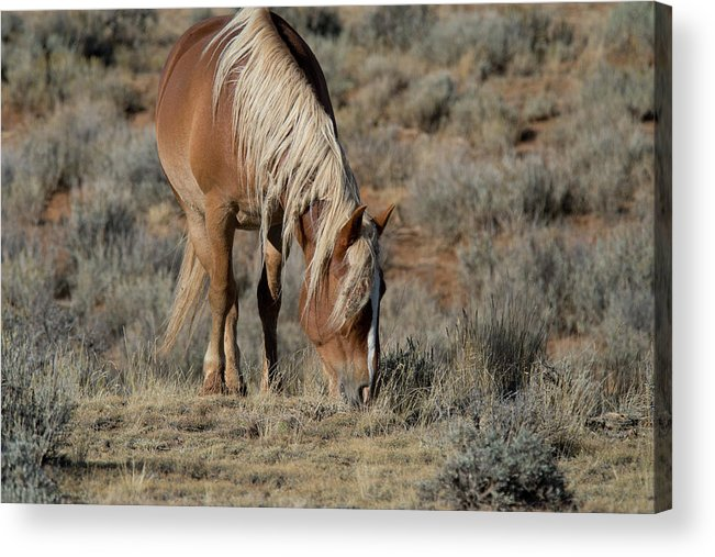 Cody Acrylic Print featuring the photograph The Joy of Nature by Frank Madia