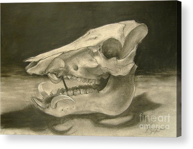 Pig Skull Acrylic Print featuring the drawing This Little Piggy by Julianna Ziegler