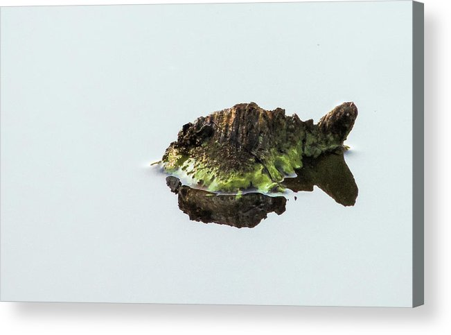 Turtle Acrylic Print featuring the photograph Turtle or Mountain by Randy J Heath