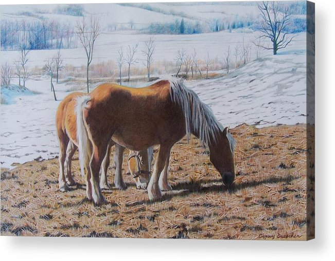 Horses Acrylic Print featuring the mixed media Two ponies in the snow by Constance Drescher