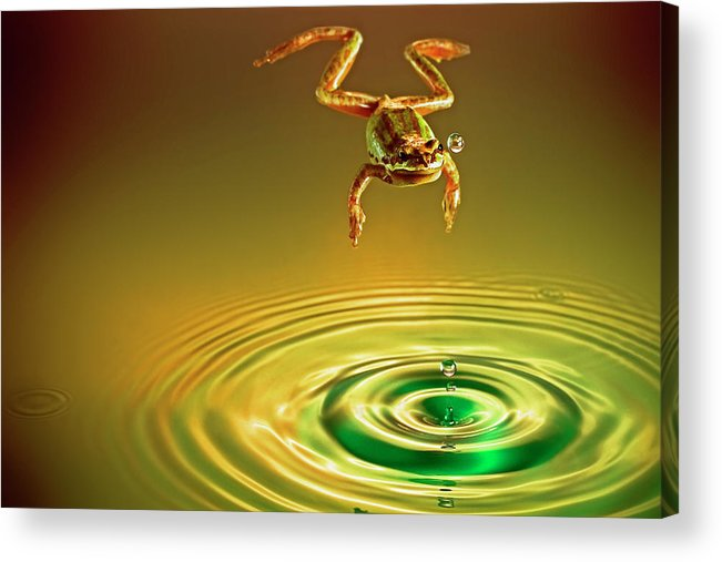Frog Acrylic Print featuring the photograph Vision by William Freebilly photography