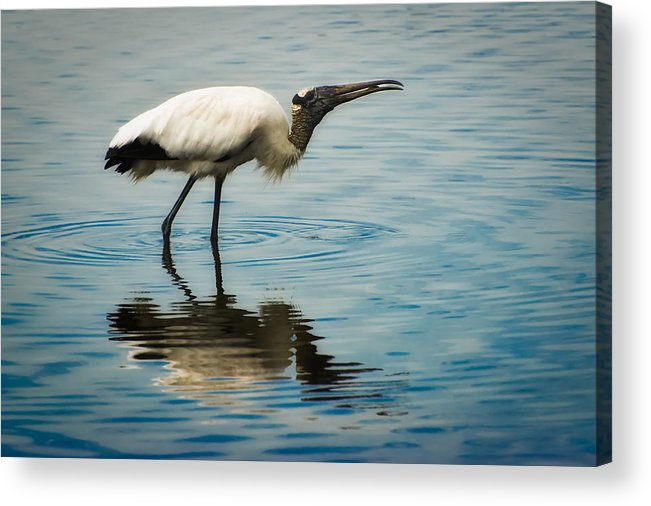 Stork Acrylic Print featuring the photograph Wood Stork by Rich Leighton