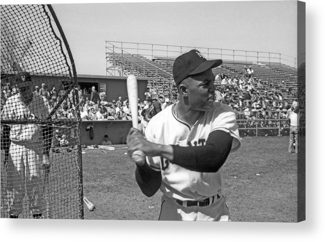 1950-1959 Acrylic Print featuring the photograph Giants Spring Training by Michael Ochs Archives