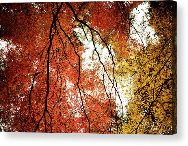 Tranquility Acrylic Print featuring the photograph Fall Colors In Japan by Jdphotography