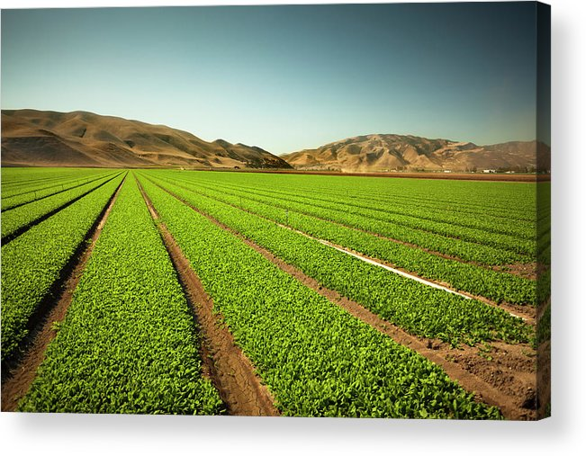 Environmental Conservation Acrylic Print featuring the photograph Crops Grow On Fertile Farm Land by Pgiam