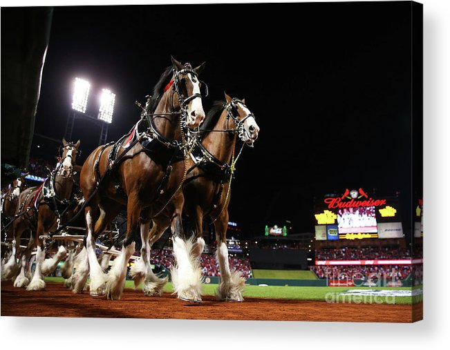 Horse Acrylic Print featuring the photograph World Series - Boston Red Sox V St by Ronald Martinez