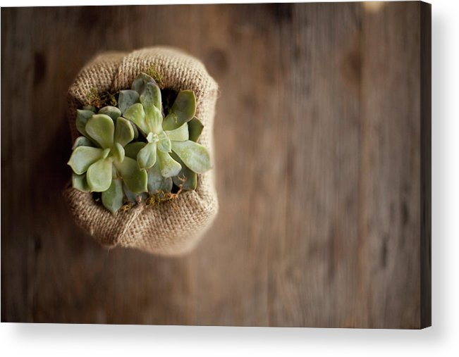 Material Acrylic Print featuring the photograph A Small Succulent Plant In A Container by Mint Images - Britt Chudleigh