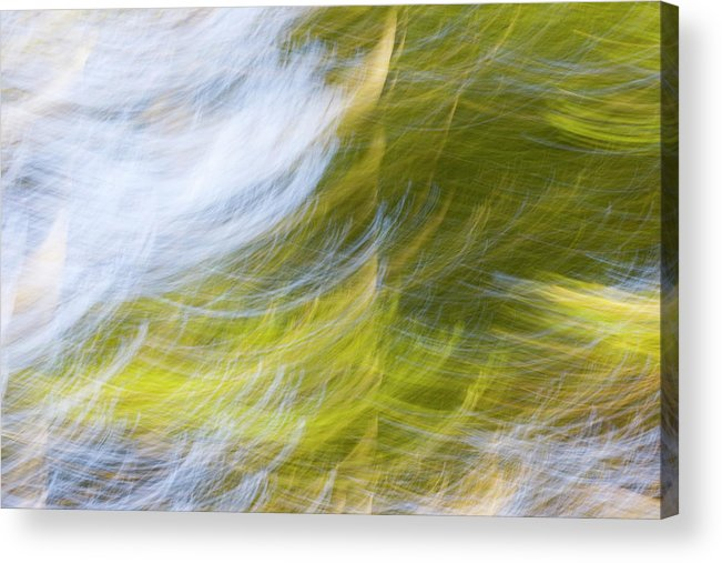 Full Frame Acrylic Print featuring the photograph Abstract Close Up Of Trees by Background Abstracts