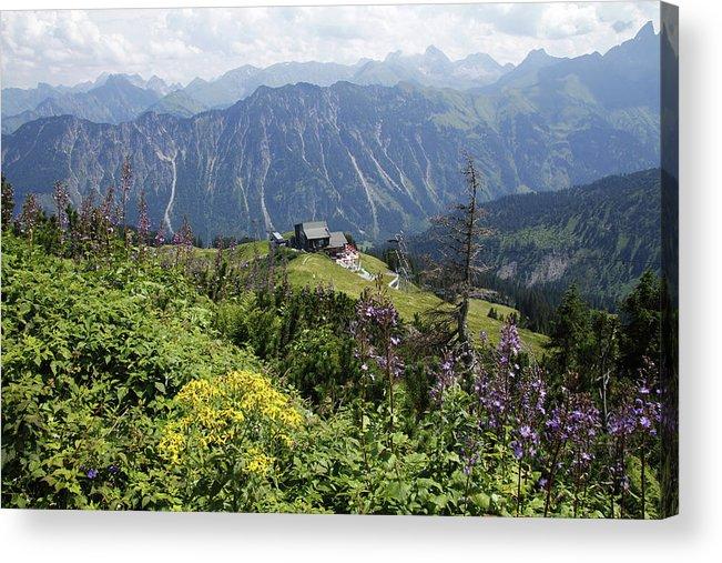 Majestic Acrylic Print featuring the photograph Alpine Flowers At Fellhorn, Allgäu by Hans-peter Merten