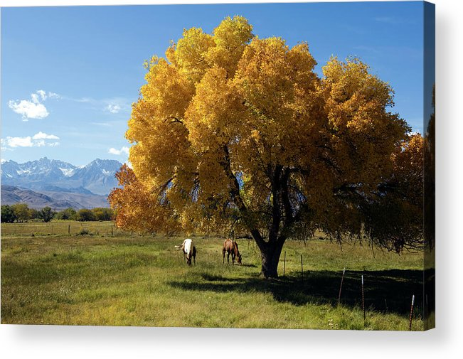 Horse Acrylic Print featuring the photograph Autumn Horses by Kevinjeon00
