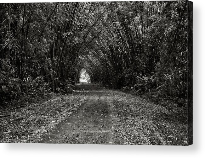Trinidad Dreamscape Acrylic Print featuring the photograph Bamboo Cathedral I by Trinidad Dreamscape