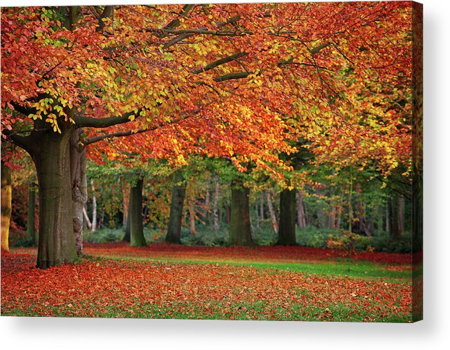 Orange Color Acrylic Print featuring the photograph Beautiful Autumn In Park by Lorado