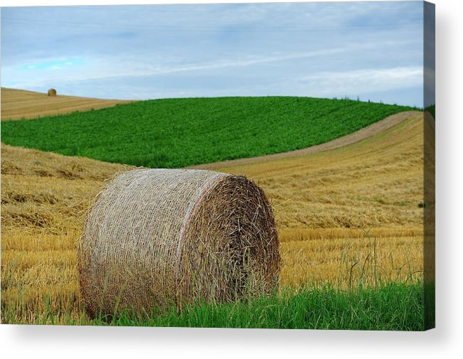 Tranquility Acrylic Print featuring the photograph Biei...patchwork Road by By Alan Tsai