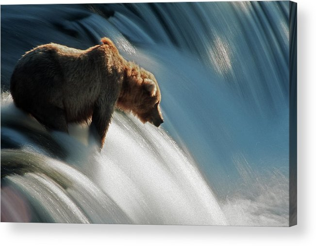 Poetry- Literature Acrylic Print featuring the photograph Brown Bear At Brooks Falls by Mark Newman
