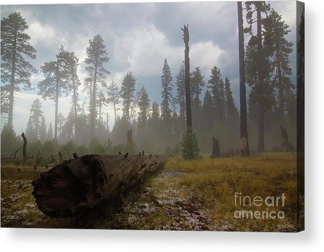 Burnt Acrylic Print featuring the photograph Burned Trees At Lassen Volcanic by Victor De Souza