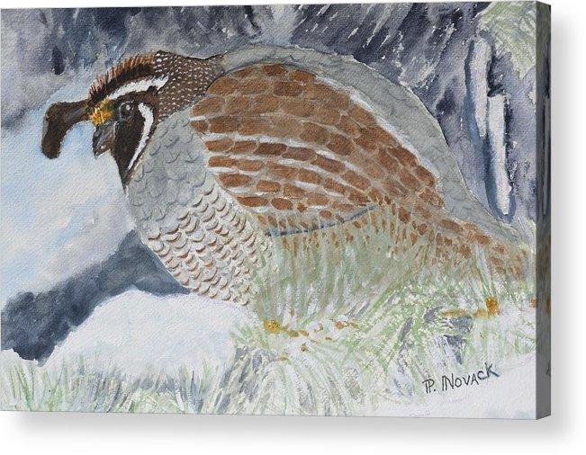 Bird Acrylic Print featuring the painting CA Mountain Quail by Patricia Novack