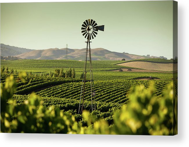 Sonoma County Acrylic Print featuring the photograph California Wine Country by Halbergman