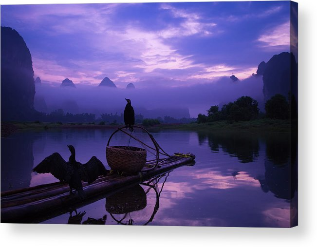 Chinese Culture Acrylic Print featuring the photograph Cormorant On Li River by Coffeeyu