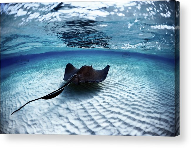 Underwater Acrylic Print featuring the photograph Deadly Stingray by Extreme-photographer