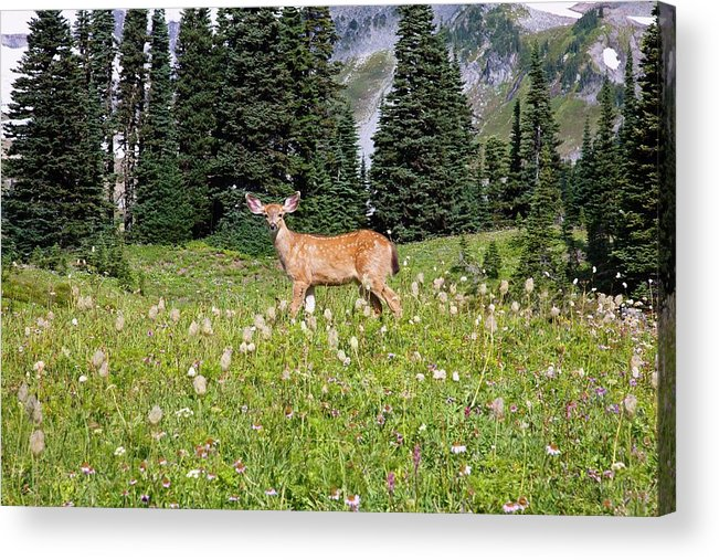 Alertness Acrylic Print featuring the photograph Deer Cervidae In Paradise Park In Mt by Design Pics / Craig Tuttle