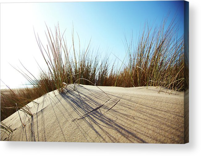 Tranquility Acrylic Print featuring the photograph Dune Grass On A Sand Dune At The Beach by Thomas Northcut