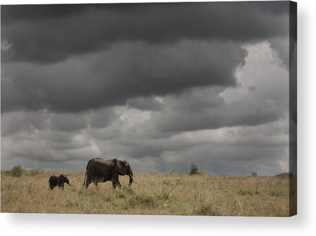 Kenya Acrylic Print featuring the photograph Elephant Under Cloudy Sky by Buena Vista Images