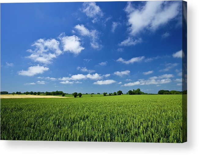 Environmental Conservation Acrylic Print featuring the photograph Fresh Air. Blue Skies Over Green Wheat by Alvinburrows