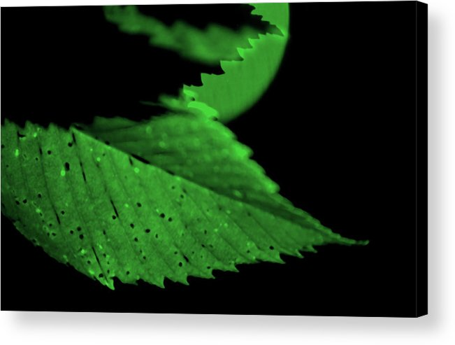 Leaf Acrylic Print featuring the photograph Green Leaf in Sun by Lonnie Paulson