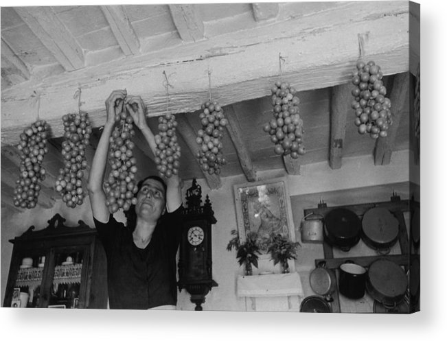 Hanging Acrylic Print featuring the photograph Hanging Tomatoes by Haywood Magee