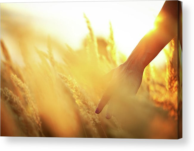 Farm Worker Acrylic Print featuring the photograph Harvest In The Morning by Aleksandarnakic