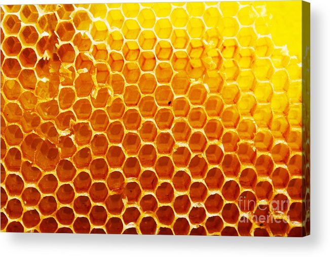 Bee Acrylic Print featuring the photograph Honey Beehive by Val Lawless