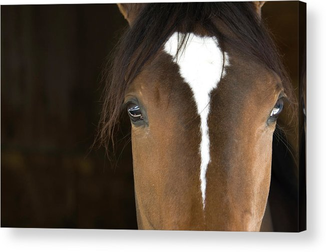 Horse Acrylic Print featuring the photograph Horse Head by Rterry126