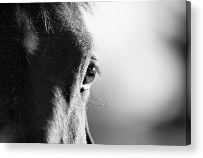Horse Acrylic Print featuring the photograph Horse In Black And White by Malcolm Macgregor