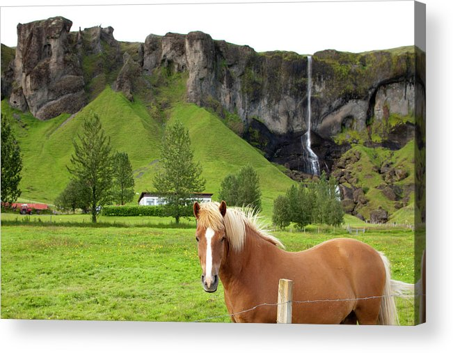 Scenics Acrylic Print featuring the photograph Icelandic Horse And Waterfall, Vik by Paul Souders
